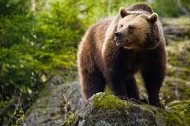 Categoria foresta temperata la mia passione per gli animali - Gli animali della foresta pluviale di daintree ...